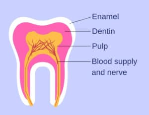Simple diagram showing the layers of a tooth